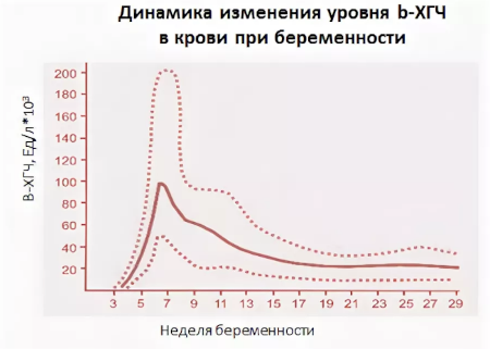 Уровень ХГЧ в крови